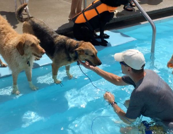 Teach Your Dog How To Swim In 3 Easy Steps