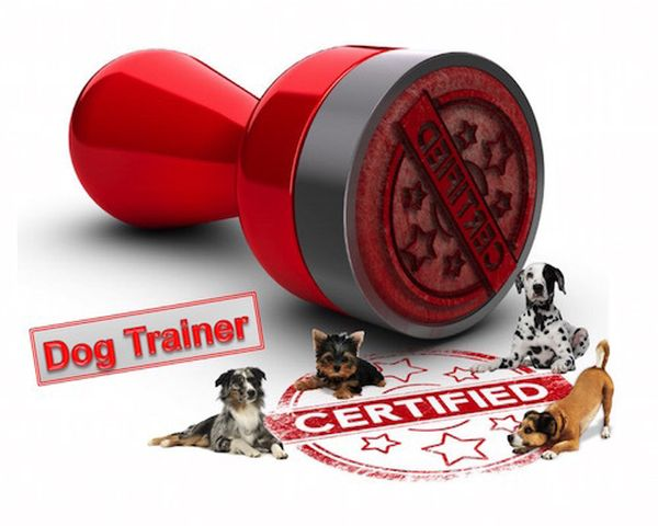 What is a certified dog trainer, and do I need one?