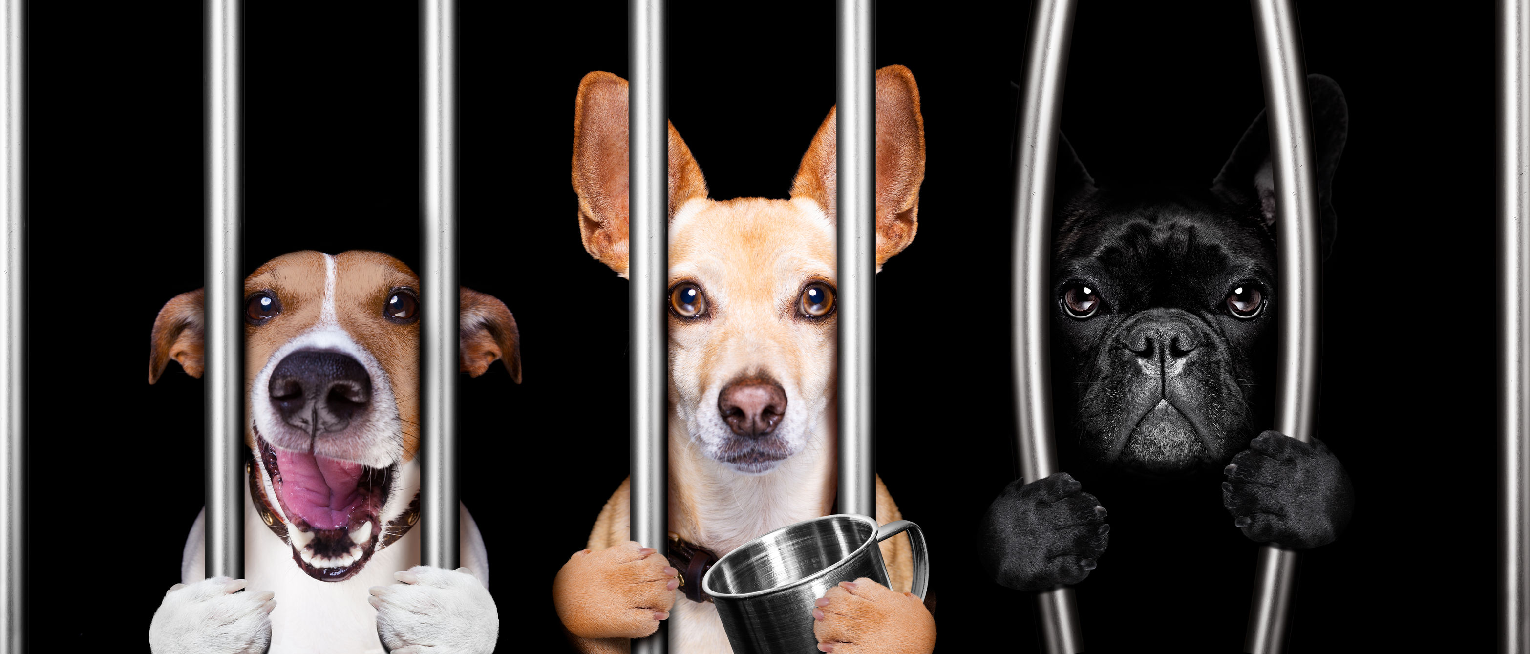 Do you punish your dog? If so, how? If not, why not?